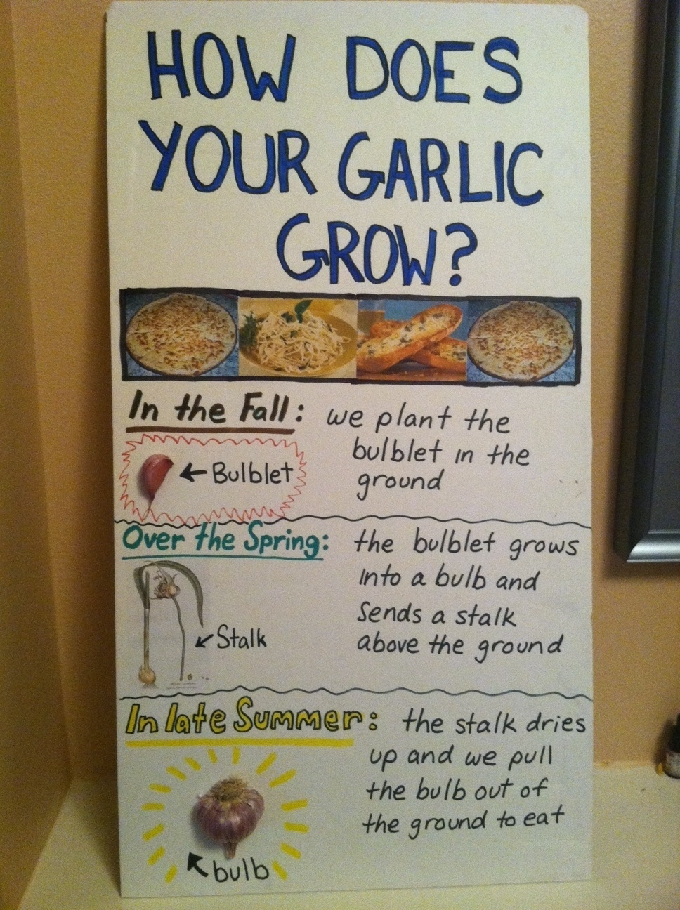 How does your garlic grow south whidbey school farm and gardens