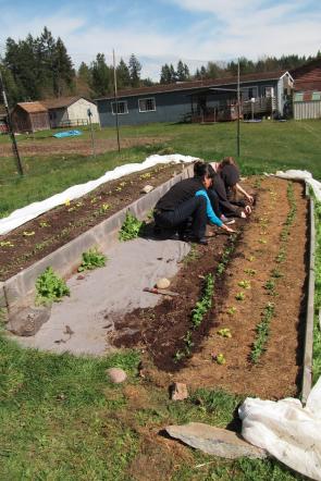 pea planting SWA1_3737