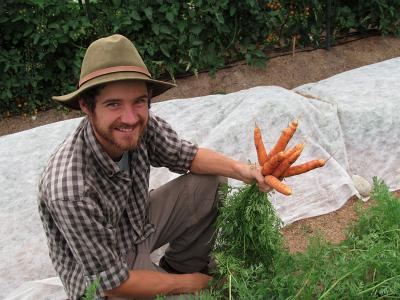 harvest carrots 29aug14_5445