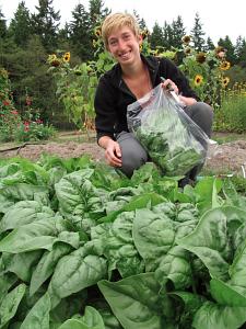 harvest spinach kaitlin 20aug14_5448