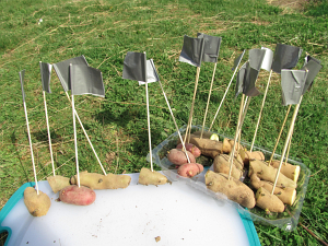 first grade flagged potatoes_7406