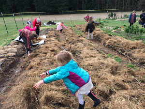first grade mulching with hay_3404