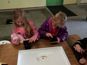 first grade planting seeds for starts march2015_3400