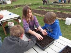 Plant peas in soil blocks