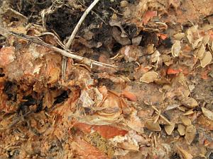 pumpkins decomposing_7296