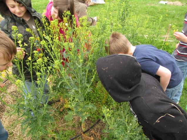 The children eating the kale raab like deer.