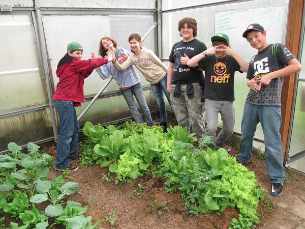 LMS hoophouse lettuce april_7456a