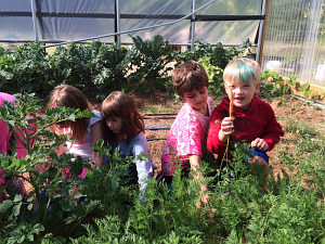 first grade carrot pulling_4748