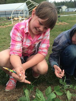 fourth grade pea tendrils_4106