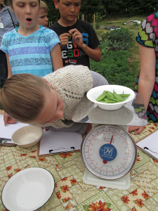 fourth grade peas weighing_2463