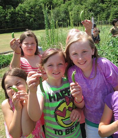 peas third grade_2494