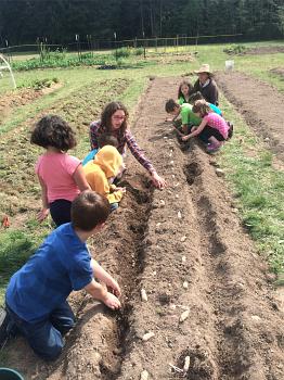 second graders makah ozette potato_4366