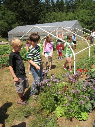 third grade phacelia pollinator_2488