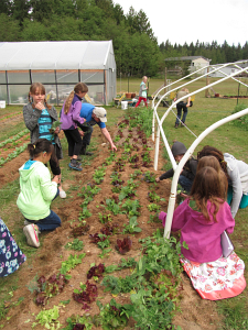veggie tunnel being enjoyed by fourth graders_7822
