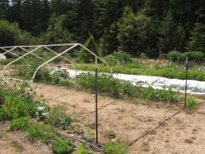 Veggie tunnel with beans, cucumbers and tomatoes