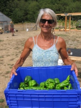 Peppers for Good Cheer