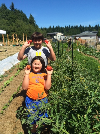 Tomatoes for Whidbey Island Nourishes (WIN)