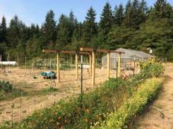 harvest shed beams up_5487