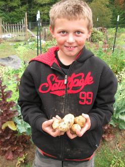 potato harvest third grade_0626