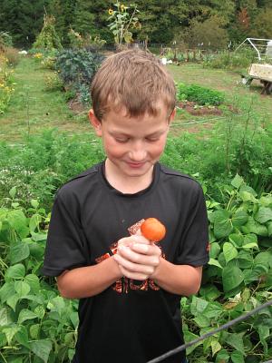 tomato happiness_0743