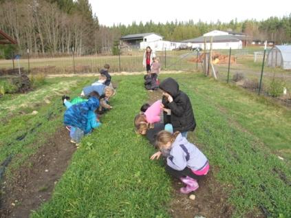 Examining cover crop