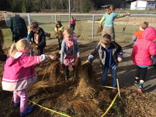 Mulching while they decompose!