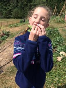 fourth grade eat pea sandwich_7472