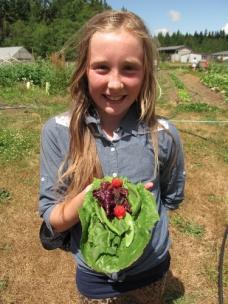 garden taco peas lettuce strawberries_4183