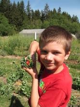 garden taco with strawberry_3818