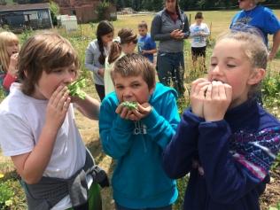garden tacos eating_7476