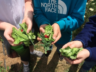 garden tacos peas and strawberries_7475