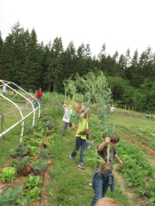 kale plants carrying2_3863