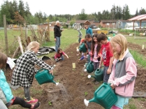 second grade lettuce watering_3433