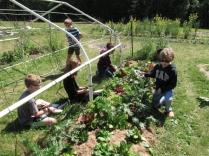 third grade salad bar garden2_3751