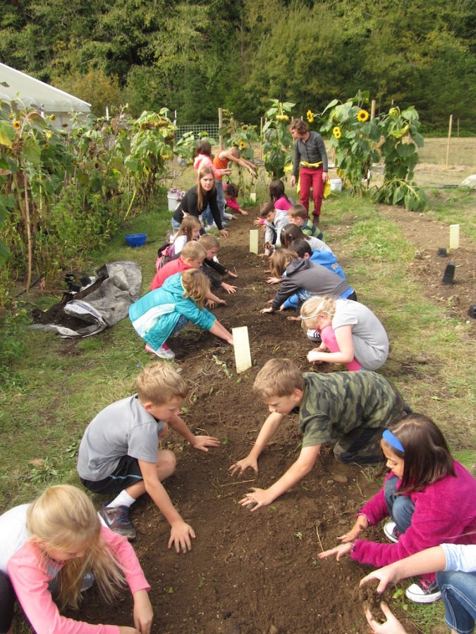 Second graders planting cover crops
