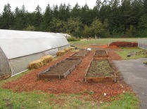 Kindergarten garden at the school farm spiffed up!