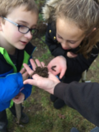 Finding worms!