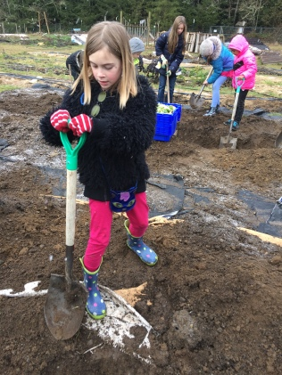Digging a trench for compost