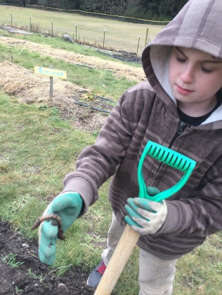 Saving worms from cover crop chopping