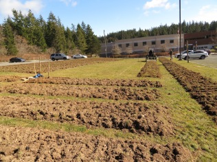 High School being tilled_0459 copy