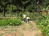 Heading through the squash patch