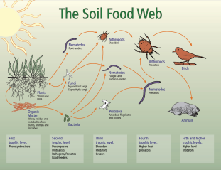 Click to make this soil food web bigger!