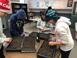 transplanting into soil blocks_2931 copy
