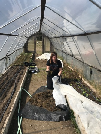Mulching lettuce and bok choy in the hoophouse